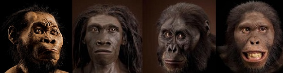 Ape Men Human Evolutionary avatars