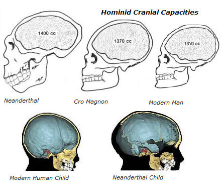 Cro Magnon, Neanderthal and Modern Human Cranial capacities