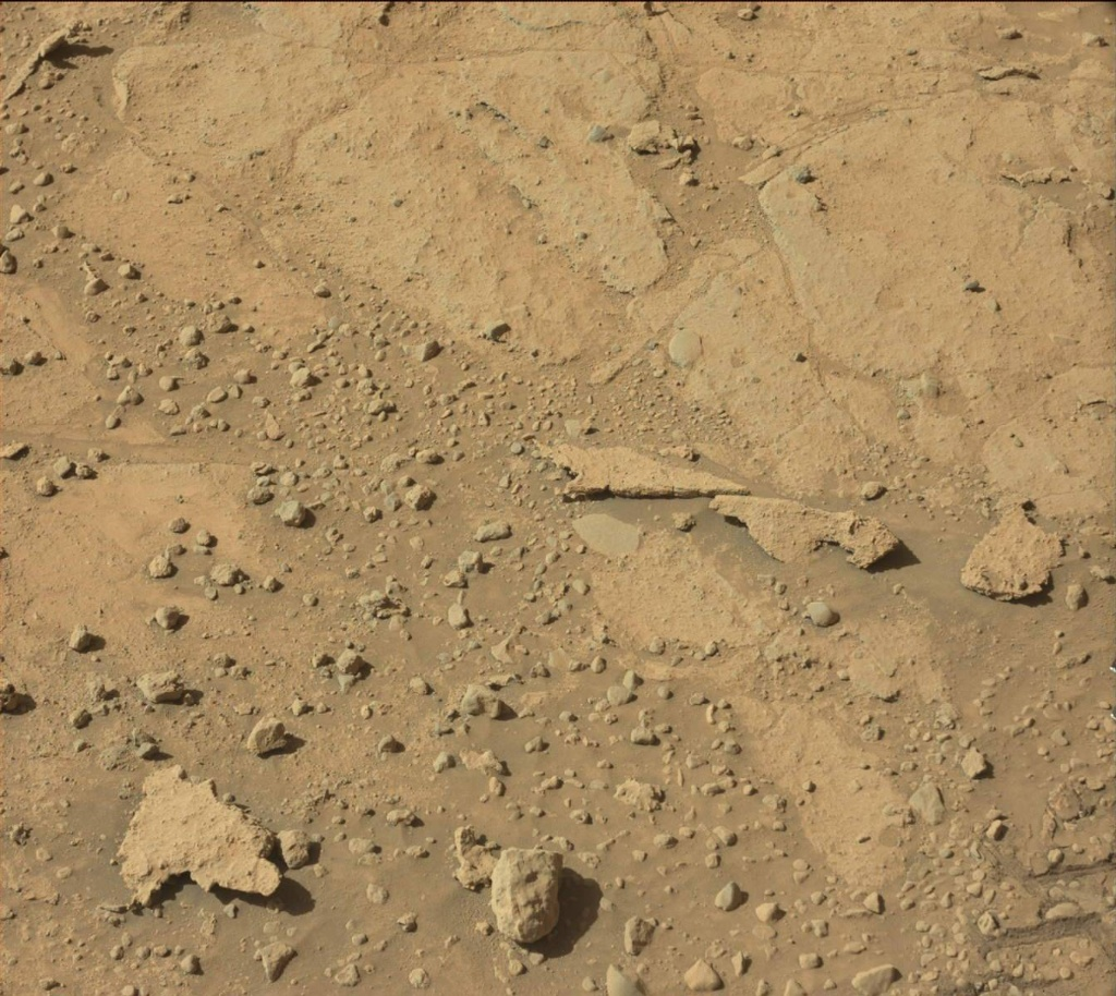 Raw NASA image of what appears to be a lizard - reptil crawling on the surface of Mars. Image # SOL597