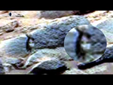 Humanoid Images from Mars or Paredoilia ?
